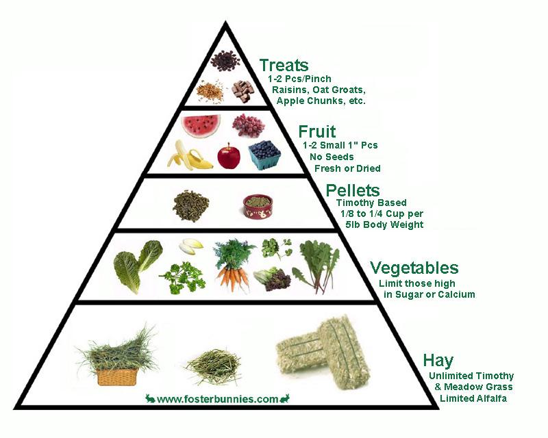 الهرم الغذائي للأرنب Foodpyramid
